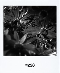 """#DailyPolaroid of 5-5-12 #220 • <a style=""""font-size:0.8em;"""" href=""""http://www.flickr.com/photos/47939785@N05/7003893792/"""" target=""""_blank"""">View on Flickr</a>"""