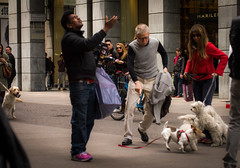 oh my.... dog!! (sk0o) Tags: street people dog milan dogs cane luca strada milano persone revolt cani rivolta lucaschinetti schinetti