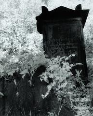 Golzheimer Friedhof II (Silberton) Tags: hasselblad mcp efke infrarot adox moersch se6 ir820 mytold