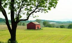 Little Red Barn (cscott_va.) Tags: barn virginia scene explore redbarn