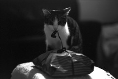 ow, it's my birthday? Thanks for the gift (Ghostwriter D.) Tags: cats cat wrapping gift opening pulling unwrap