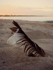 (.sarah444.) Tags: beach sand feathers feather blackfeather whitefeather