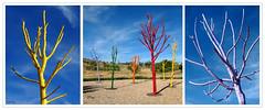 6 de junio (Carlos Torija) Tags: trees sky color colour tree colors arbol rboles colours arboles cielo rbol parchis parchs