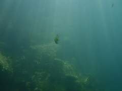 Solitude (DivemasterTroy) Tags: fish underwater scuba sunrays quarry freshwater