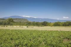 Le Géant de Provence / The Giant of Provence (Laurent VALENCIA) Tags: les montagne canon paca bleu ciel 5d provence avignon vignes mont vaucluse ventoux fontaines pernes