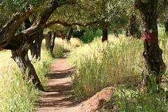 Follow the path.. (areyarey) Tags: africa old travel shadow food tree green tourism nature field leaves thanks rural walking relax landscape botanical outside outdoors countryside healthy woods scenery view natural grove earth path walk farming harvest scenic olive culture atmosphere sunny ground orchard trail morocco health walkway plantation oil land vegetation production destination dreamy produce aged agriculture botany product region arid pathway agricultural ripe wooded areyarey