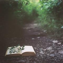 my days run over (wildorange55) Tags: flowers summer film forest dark book is woods bokeh good path rolleicord portra160 idoworktoodontgettheideathatmysummeriscompletelyidyllic justpartlyso