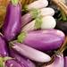 Gibbs Road Farm veggies (June 2012) eggplant