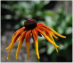 DSC_7464 (Stella Blu) Tags: orange flower floral bokeh thumbsup rockon bigmomma stellablu nikkor105mmf28gvrmicro fotocompetition fotocompetitionbronze yourockwinner agcgwinner yourockunanimous nikond5000 pregamesweepwinner gamesweepwinner pregameduelwinner