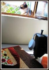Enquanto trabalho ... (Joana Joaninha) Tags: amigos amor gato amizade janela bolsa amo joanajoaninha