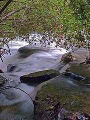 High Bush Cranberry Swirl (+David+) Tags: waterfall corbettsglen postcardfalls highbushcranberrybush