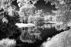 Kentucky Dreams (Jon Dickson Photography) Tags: infrared lexington pond lake bw trees
