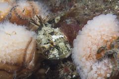 20160803-Eyemouth24 (Dacmirc) Tags: eyemouth diving ukdiving rebreather