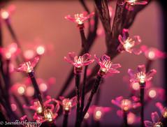 Lighted Tree (SaurabhM Photography) Tags: lightedtree calmness feelthebeauty