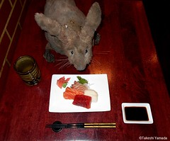 Dr. Takeshi Yamada and Seara (Coney Island Sea Rabbit) at the Sake Japanese sushi buffet restaurant in Brooklyn, NY on March 30, 2016.  20160330 Wed. 2 DSCN4848=3030C. assorted sashimi (8 pieces) (searabbits23) Tags: searabbit seara takeshiyamada  taxidermy roguetaxidermy mart strange cryptozoology uma ufo esp curiosities oddities globalwarming climategate dragon mermaid unicorn art artist alchemy entertainer performer famous sexy playboy bikini fashion vogue goth gothic vampire steampunk barrackobama billclinton billgates sideshow freakshow star king pop god angel celebrity genius amc immortalized tv immortalizer japanese asian mardigras tophat google yahoo bing aol cnn coneyisland brooklyn newyork leonardodavinci damienhirst jeffkoons takashimurakami vangogh pablopicasso salvadordali waltdisney donaldtrump hillaryclinton polarbearclub