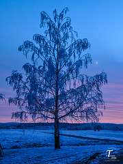 Tor Magnus Anfinsen-000116 (Tor Magnus Anfinsen) Tags: winter snow tree sunset hobl norge norway red blue white farm