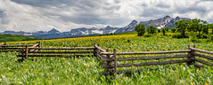 Happy Fence Friday in the San Juan Mountains (Squirrel Girl cbk) Tags: 2016 colorado june sanjuanmountains fence wildflowers
