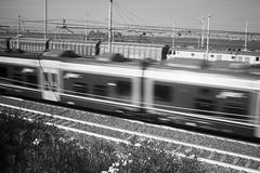 Jazz 🎵🎵  #stolenstuff #graffitiblog #check4stolen #flickr4stolen #running #jazz #blackandwhite #contrast #trainspotting #trainforlife (stolenstuff) Tags: instagram stolenstuff graffiti graffititrain benching