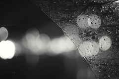 Listen to the rhythm of the falling rain (Black Room Photography) Tags: travel blackandwhite bokeh rain raindrops rainydays road roadtrip openroad window driving perspective traveling wanderlust nikkond3300 50mm14