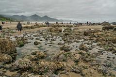 tide pools (rovingmagpie) Tags: oregon cannonbeach oregoncoast haystackrock tidepools touregon summer2016