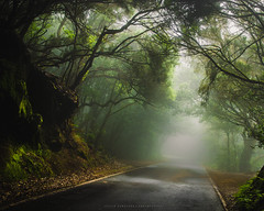 Misty Road (Javier Sampedro) Tags: tenerife canary islands spain anaga forest nature landscape mist road laurisilva nikond5100 sigma1750 bosque serenidad aire libre