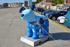 Skipper-A-17-September-2016 (Steve Ellwood Whitley Bay) Tags: greatnorthsnowdogs guidedog mikeclay northshields cliffordsfort ellwood steveellwood skipper joannewishart dfds westernquay fishquay