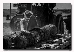 The Saw (jeremy willcocks) Tags: saw wood southhamsvintagerally southhams devon uk landscape man blade sawdust tree sawbench hat tractionengine blackandwhite mono jeremywillcocks fujixt1 xf50140mm cutting sawing