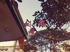 #galaxy #galaxys7 #samsung #samsunggalaxys7 #samsungmobile #samsungmoment #photography #ilovephotography #nature #haveagoodday #haveaniceday #flowers #instanature #instaflower #sky #amateurphotographer #amazing #wonderful #hobby #revistaxapuri (juniorcarreiro) Tags: samsungmoment galaxys7 galaxy samsungmobile samsunggalaxys7 revistaxapuri photography sky amateurphotographer haveagoodday amazing instaflower haveaniceday nature samsung hobby ilovephotography wonderful instanature flowers