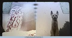 Viewer/Player (andrefromont/fernandomort) Tags: andrfromont andrefromontfernandomort fernandomort diptych diptyque meditation mditation chouette owl chat cat littledoglaughedstories littledoglaughednoiret