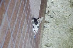 Today's Cat@2016-09-12 (masatsu) Tags: cat thebiggestgroupwithonlycats catspotting pentax mx1