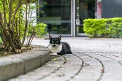 (iam543) Tags: sonya7rii sonyalpha7rii sonyilce7rm2 taiwan newtaipeicity cat