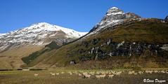 007 (Steve Daggar) Tags: wanaka newzealand mountains rur