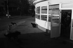 (Ibon M.) Tags: door dogs port puerta romania perros kafka franzkafka rumania chiens txakurrak atea botoșani zakurrak