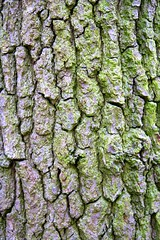 0206 2011 IMG_5212 (DaveScouller) Tags: park surrey bark richmondpark project5 project52 photo2011