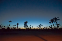 06052012-Palmeraie Marrakech by night (WiLPrZ) Tags: africa panorama nikon flickr oasis morocco maroc marrakech maghreb marruecos printemps palmiers afrique palmeraie wow1 nikond90 flickraward lesdeuxtours yourbestphotography 1116mmtokina flickrunitedaward flickrtravelaward mai2012 weekenddu8mai