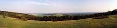 Kingley Vale Panorama