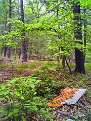 IMG_3793 - Burlington Landlocked Forest, Burlington, MA (Syed HJ) Tags: burlington forest canon ma bedford lexington burlingtonma g9 bedfordma lexingtonma canong9 burlingtonlandlockedforestburlingtonma landlockedforest