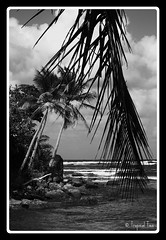 Hodges Bay, Calibishie, Dominica (Tropical Ties) Tags: ocean seaweed tree beach silhouette photography photo sand photographer image stock picture palm atlantic canon350d caribbean favourite canoneos canonrebelxt atlanticocean coconutpalm stockphoto dominica darksand stockphotography atlanticsea stockimage sigma1770 hodgesbay calibishie natureisland lightsand waitukubuli dominicaimage dominicaphoto dominicaphotography dominicapicture
