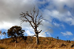 Landscape journey 22_23_24_june 085 (Orangedrummaboy) Tags: trees sky clouds creek forest landscape walk au australian australia bushwalking canberra adventures aussie dslr contrasts act downunder deadtrees mittagong greatoutdoors humehighway tragicbeauty canberranaturereserve canberratosydney davidjburke orangedrummerboy davidjohnburke© orangedrummaboyphotographycanberra djburke httpswwwfacebookcomorangedrummaboy thmccit httpstwittercomorangedrummaboy