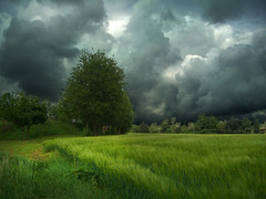 CIMG0393 storm - ON EXPLORE FRONT PAGE - #1 - GETTY IMAGE (pinktigger) Tags: italy storm field clouds countryside italia day country friuli fagagna greenscene fantasticnature feagne pinnaclephotography rememberthatmomentlevel4 rememberthatmomentlevel1 rememberthatmomentlevel2 rememberthatmomentlevel3 vigilantphotographersunite vpu2 vpu3 vpu4 vpu5 vpu6 vpu7 vpu8 vpu9 vpu10