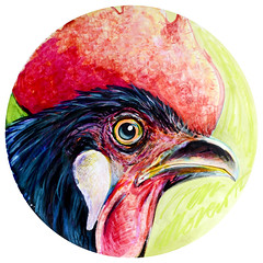 Gallo (Groenewold Moreno) Tags: color chicken animal illustration gallo fight farm drawings cock colores chick marker animales rooster gonzalez