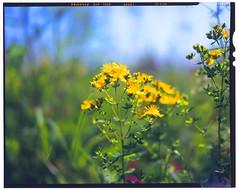 graflex25.06.12 (Dr. Alex O Chevtchenko) Tags: flowers graphic velvia fujifilm crown graflex