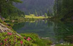 Lago delle Streghe (ITALY) (SMFREE.72) Tags: light red italy green nature water landscape lago pentax fiori alpi montagna montain paesaggio kx alpedevero tamron1750 lagodellestreghe