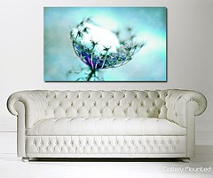 WINTER WHISPER (Canvas Art Shop) Tags: flowers art floral wallart posters prints homedecor flowerart floralprints canvasart canvasprints flowerprints flowerwallart flowercanvasprints flowercanvasart