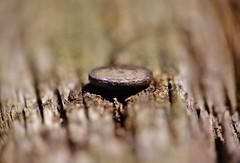 Shallow Depth of Field (sea turtle) Tags: macro metal closeup wooden dof bokeh sony nail depthoffield greenlake 18200 shallowdepthoffield macrolens woon nex raynox raynox150 sonylens emount nex3 sonynex sonynex3 sel18200 emountlens macroadapterlens sonyemountlens