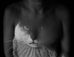 Possession (Vasilis Amir) Tags: boy portrait blackandwhite monochrome cat experimental doubleexposure ghost surreal transparency transparent catman  thelittledoglaughed thecatwhoturnedonandoff vasilisamir ldlnoir
