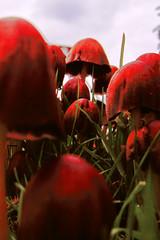 fungi (gagilas) Tags: fungi mushroom erith kent delete delete2 delete3 delete4 delete5 delete6 delete7 save save2 delete8 delete9 delete10