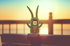 Plankton Rejoicing! (pixelmama) Tags: chicago sunrise fence bench illinois lakemichigan navypier plankton eightdaysaweek chasinglight pixelmama toyintheframethursday htitft