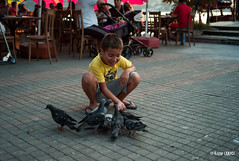 Feed the bird (zgr AKICI) Tags: leica bird turkey child son istanbul m8 feed kaan kanlica carlzeiss35mmf2