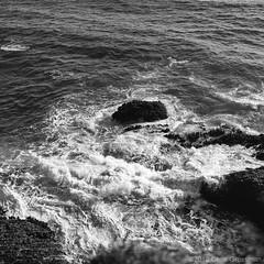 Surf and Seaweed - Hasselblad 500C/M - Zeiss Planar 80mm f/2.8 T* CF - Pan F+ (divewizard) Tags: ocean california sea blackandwhite bw cliff lighthouse white black seaweed 120 6x6 blancoynegro film blanco water analog zeiss mediumformat square t blackwhite analgica rocks whitewater surf noir waves pacific noiretblanc negro hasselblad kelp f foam carl xo pan breakers blanc ilford f28 x0 cf pointarena planar ilfordpanf pointarenalighthouse panf 80mm 500cm pelcula hasselblad500cm mendocinocounty ilfordpanfplus
